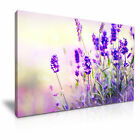 FLOWER Lavender Canvas Framed Printed Wall Art 1 ~ More Size