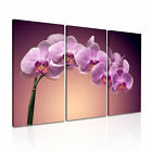FLOWER Orchid Canvas Framed Printed Wall Art 15 ~ 3 Panels
