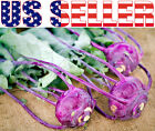 150+ ORGANICALLY GROWN Early Purple Vienna Kohlrabi Seeds Heirloom NON-GMO Turni