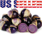 50+ ORGANICALLY GROWN Purple Tomatillo Seeds Heirloom NON-GMO Sweet Rare From US