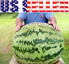 10+ ORGANICALLY GROWN XXL GIANT 100 LB Watermelon Seeds Super Sweet Large USA !