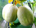 25+ RARE ORGANICALLY GROWN Crystal Apple Cucumber Seeds Sweet Heirloom NON-GMO