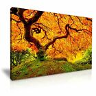Autumn Maple Tree River Canvas Wall Art Picture Print 9 Sizes to Choose