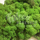 MEDIUM GREEN BEST QUALITY REINDEER MOSS - CHRISTMAS CRAFT DOOR WREATH FLORIST