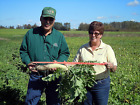 Groundhog™ Radish seed.  Store soil Nutrition, Great for no-till techniques!