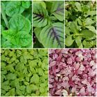 Asian/Indian Vegetable seed assortment-choose your seeds and bundle shipping!!