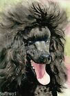 BLACK MAGIC Standard Poodle Dog Art Print of Watercolor Painting Artist Signed