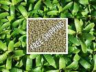 Special bromeliad fertiliser 120g or 240g NEW *PBL*