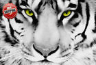 "Animal Big Cat White Tiger Face Poster Print Wall Art Photo Picture 30"" x 20"""