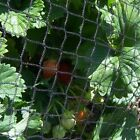 Anti Bird Crop Veg Netting Protection Pigeon Net Pond Fruit Various Widths Sizes