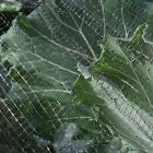 Protection Butterfly Netting Veg Crop Protection Anti Bird 2M,4M,6M,8M WIDTHS