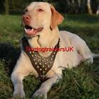 Studded Dog Harness for Medium and Large Dog | Soft Padded Leather Dog Harness