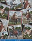 Horse Block Crafting Quilting Cotton Fabric CHOICE YOUR LENGTH
