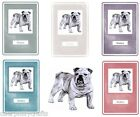 Bulldog Notebook by Curiosity Crafts NEW* Choice of Colours