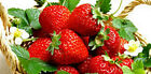 STRAWBERRY Fragrance Oil Fruit Scents for Cosmetics, Soap,Candle 10ml 30ml 100ml