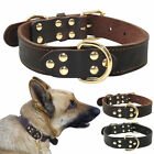 Brand Genuine Leather Dog Pet Collars Luxury Top Grade Heavy Duty Soft for Dogs