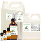 Rosemary Essential Oil 100% Pure Many Sizes FreeShip