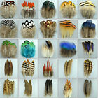 Внешний вид - Wholesale 10-100PCS beautiful pheasant tail & peacock feathers 3-20cm/2-8inches