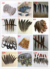 Wholesale 10-100PCS 4-20cm/2-8inches Beautiful Pheasant Tail  Peacock Feathers