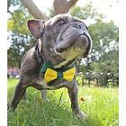 Green and Yellow Bow Tie for Dogs (UOH) - FREE SHIPPING