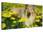 Collie in Yellow Flower Field - Gallery Grade Canvas Art + More sizes