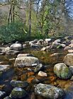 Badger's Holt Dartmeet Dartmoor Devon Art Photo Canvas (UK)