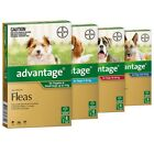 ADVANTAGE for Dogs -(4-Pack)  -SYD Stock