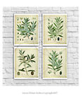 Farmhouse Wall Decor set of 4 unframed art vintage botanical art Olive Plants
