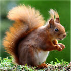 Animal Squirrel DIY full drill Diamond Painting Embroidery craft gift home decor