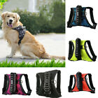 EP  Pet Dog Star Camouflage Traction Proof Breathable Chest Strap Harness US Goo