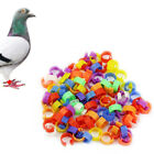 UK Durable Bird Duck Chick Parrot Pigeon Plastic Poultry Dove Clip Leg Rings Hot