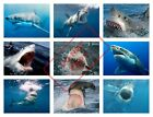 GREAT WHITE SHARK POSTER COLLAGE WALL ART (1) - VARIOUS SIZES / FRAMED OPTION