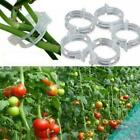 100pcs Tomato Veggie Garden Plant Support Clips For Trellis New Twine O7k9