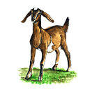 GOAT DAIRY FARMER FARMING FARM ANIMALS DECAL STICKER COUNTRY HOME HOUSE DECOR