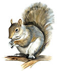 Squirrel Wild Life Animals Nature Graphic HD Art Home Decor Vinyl Decal Sticker
