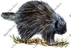 Porcupine Auto Boat RV Camper Truck Car Window Glass Body Bumper Decal Sticker