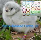We're Blessed Farms Chicken LEG BANDS chick multi color ELASTIC~USA MADE SOLD