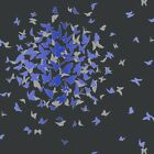 ARTHOUSE OPERA BLUE & SILVER BUTTERFLY WITH BLACK BACKGROUND WALLPAPER 417603
