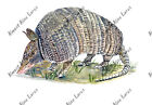 Armadillo Sticker Decal Hunt Fish Outdoors Nature Wildlife Exclusive Painting