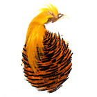 Gordon Griffiths Complete Golden Pheasant Head Grade 2