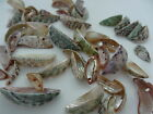 18-28mm 15/30grams VARIOUS SIZE ASSORTED MIXED COLORS SHELL BEAD NS03256