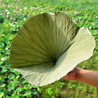 Dried Complete Lotus Leaf Folium Nelumbinis Weight Loss Tea Natural Food Wrapper