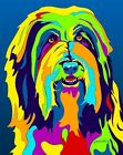 Made in USA Multi-Color Bearded Collie Dog Breed Matted Print Wall Decor