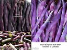 Royal Burgundy Bush Bean Seeds Deep Purple Stringless Small Space Gardening