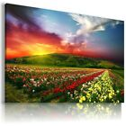 FLOWER FIELD , View Canvas Wall Art Picture Large SIZES  L164  X
