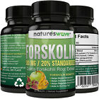 best tablet 100 - Best Forskolin 100% Pure Extract 500mg Per Tablet Maximum Strength Belly Buster!