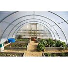 4 Year 6 Mil Clear Plastic Greenhouse Poly Film 42 ft. Wide - *VARIOUS LENGTHS*