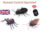 Remote Control Cockroaches Spider Ants Toy Prank Insect  Scary UK STOCK C096