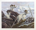 """Alaskan White Sheep by Bo Newell 20x24"""" Vintage Limited Edition Signed Print"""