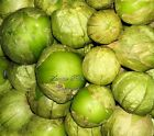 Physalis ixocarpa Tomatillo Verde Seeds Non GMO Juicy Flavorful Large Yields